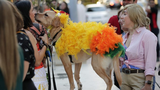 Carolina Saldana, left, stands with her dog JC, dressed as the Heihei bird character from the Disney film Moana.