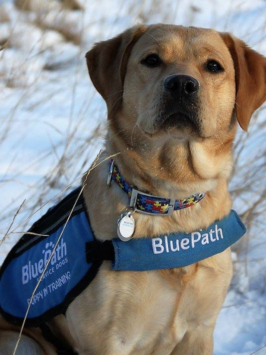 Future Autism Service Dogs Need Volunteers In Hopewell Junction Area
