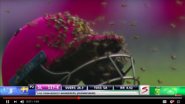 Bees land on a cricket helmet in a still from footage