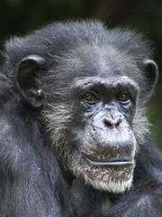 Maggie lived at the North Carolina Zoo in Asheboro,