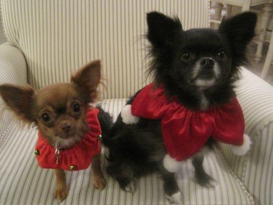 Pet Portraits: Minnie&Buddy