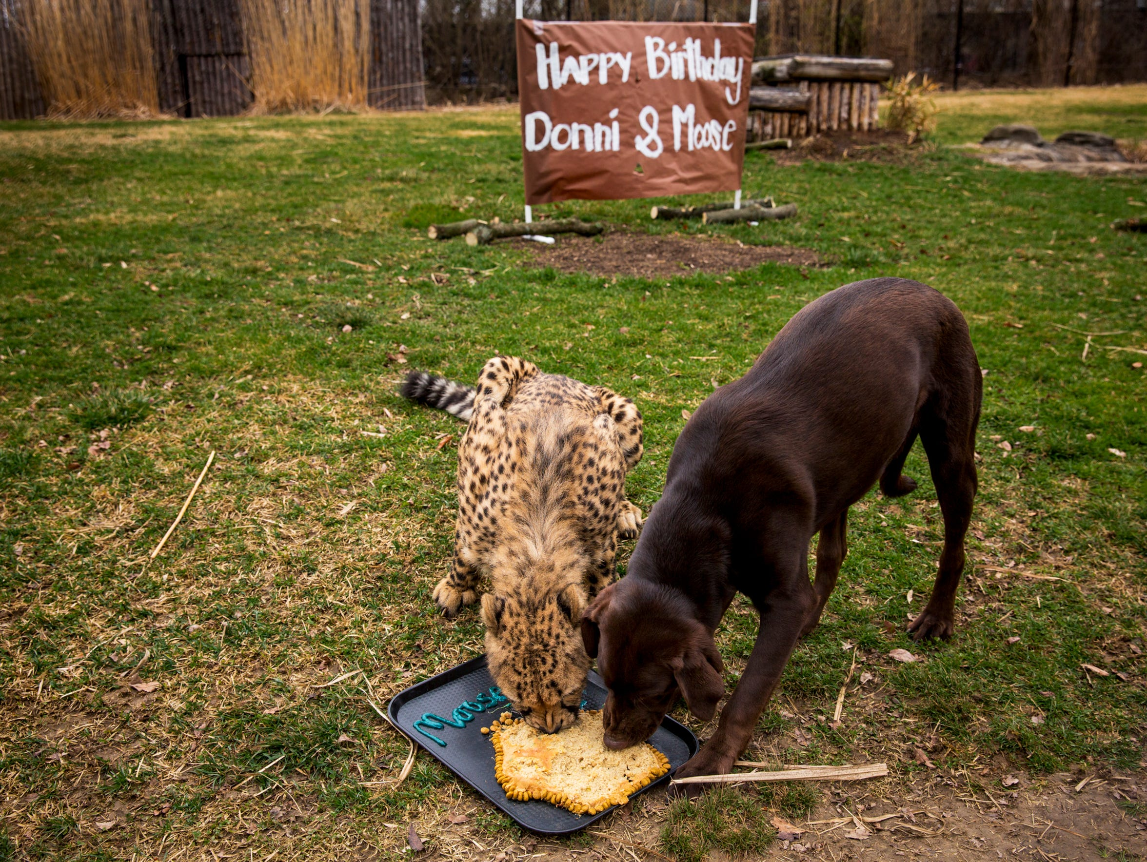 Donni eats Moose's birthday cake during their shared