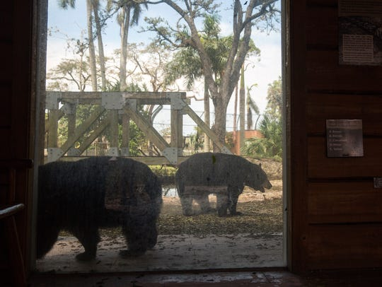 The Naples Zoo's black bears were among the first animals