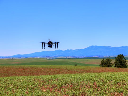 A quadcopter hovers over a field of garbanzo beans