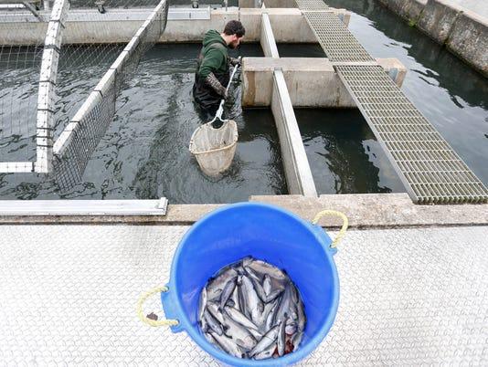 635834549028270024-tDead-fish00014
