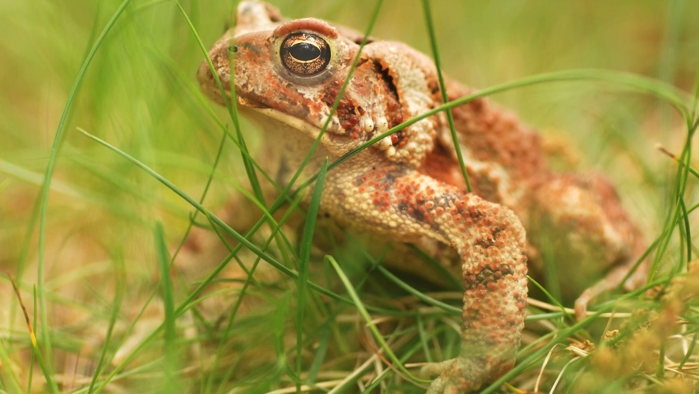 Are you listening for frogs? Metro Detroit environmentalists documenting amphibians
