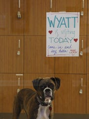 Wyatt the puppy visits the new art studios at Westminster