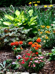 Ageratum, dianthus, zinnias, coral bells, hosta and