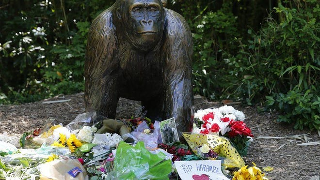 A statue of a gorilla and baby at the entrance to Gorilla World at the Cincinnati Zoo and Botanical Garden has become a memorial for Harambe, 17-year-old silverback western lowland gorilla, shot and killed Saturday after a 3-year-old fell into the enclosure and Harambe engaged with the small child.