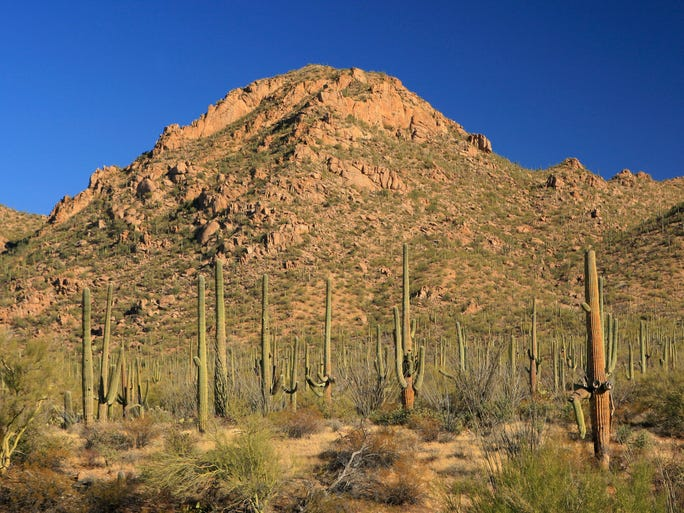 Saguaro National Park | Cactus, ponderosa pines, aspens and fir trees are all to be found at Saguaro National Park. The 92,000-acre park ranges between 2,300 feet on the west side of the part to 8,482 feet at the summit of Rincon Peak on the east side. Thanks to such an extreme elevation, Saguaro National Park is home to more than 1,700 species of plants and animals, making it one of the most biologically diverse parks in the country. | Details: Cactus Forest Drive, Tucson, 520-733-5158, www.nps.gov/sagu, $