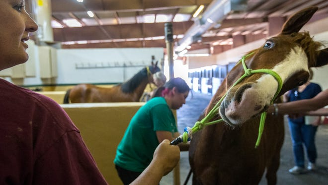 The hands-on lessons can prepare students for a variety of equine-related careers, including therapy, nutrition and training.