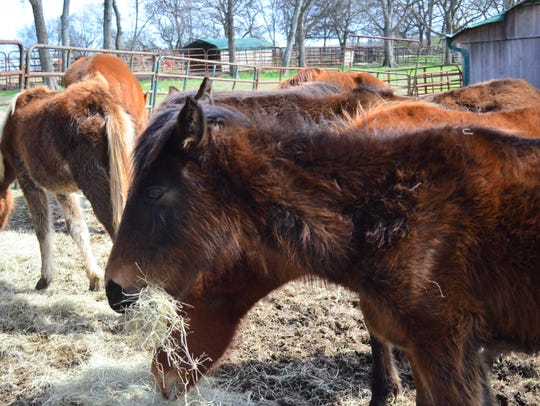 A New Day, formerly Volunteer Equine Advocates, rescues animals and rehabilitates them back health before they find new homes.
