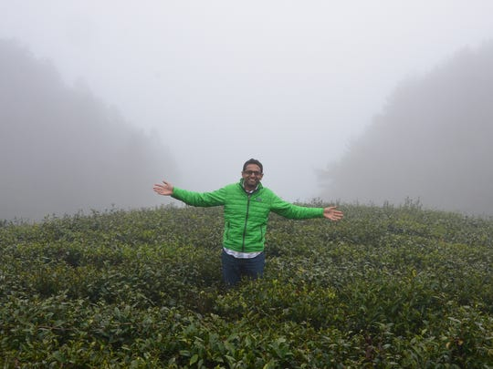 Davidson Organics co-owner Kunall Patel tours a tea garden during a misty monsoon morning in Zhejiang, China. The location is known for making organic gunpowder green teas.
