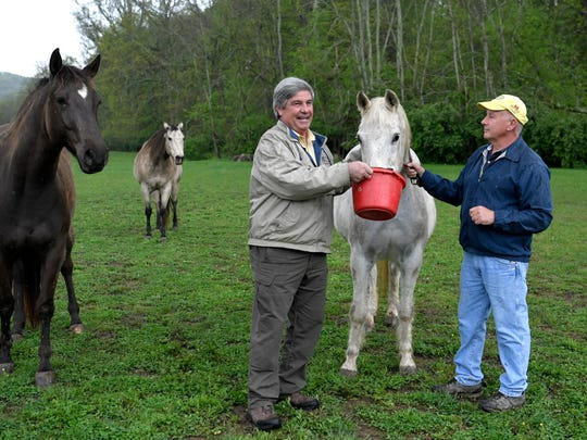 Guy Wallace and Kipp Rowan feed horses on Rowan's Williamson