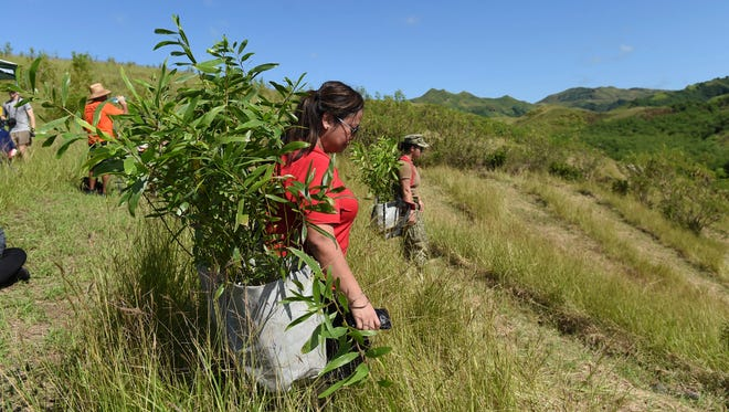Participants of The Manell Watershed Reforestation Planting Event make their way down grassy terrain at the Manell Watershed in Merizo on Oct. 21, 2017.