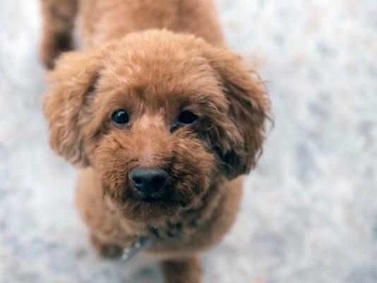 VTD0607_INSPIRE_cute pets_.jpg
