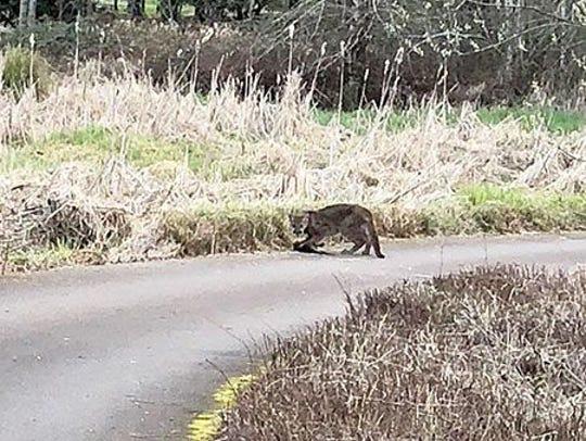 Silverton resident Tamara Swanson took this photo of