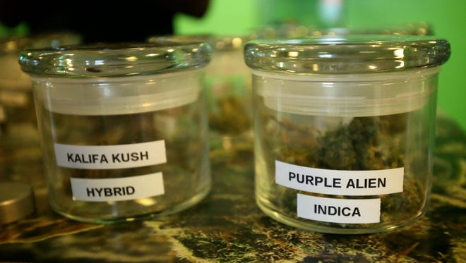 A variety kinds of marijuana samples sits on the table for licensed costumers on Friday, September 11, 2015, at 420 Dank, a medical dispensary, in Detroit. Detroit Mayor Mike Duggan wants a new city ordinance in place by the end of October to regulate the rapidly proliferating medical-marijuana dispensaries in the city after hearing there were two operating drive-through stores.