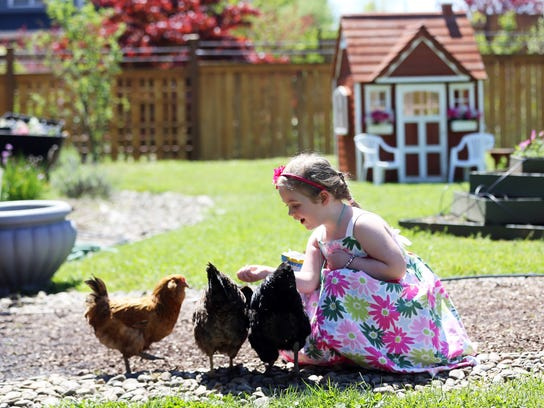 SAL0518-Forward This New Pioneers CHICKENS