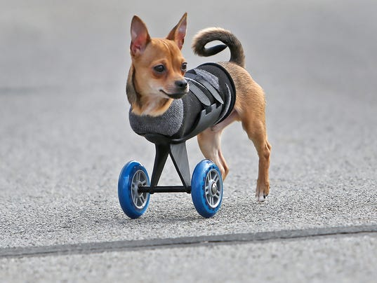 Turboroo Inspires Owners To Put A Cart Before The Dog