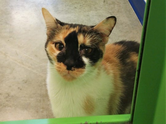 Trinity is available for adoption at the Licking County Humane Society! If you are interested in adopting from LCHS, please contact us at 740-323-2100 ext. 9 or info@lchspets.org for more information.