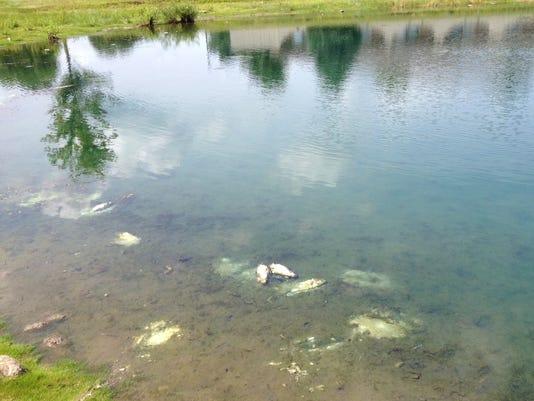 dead fish 2.JPG