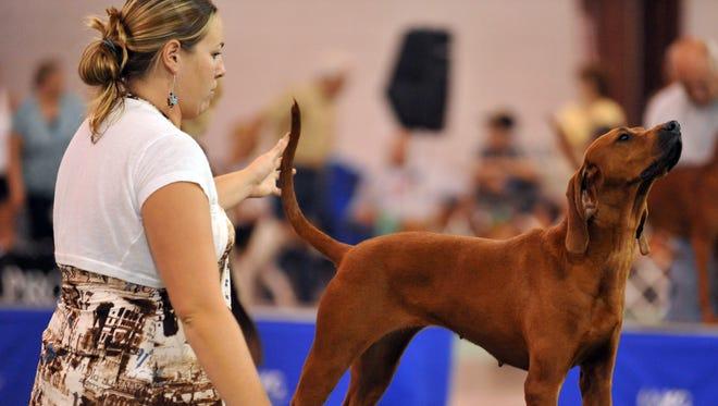 Andi Beasley, Jesup, Georgia, shows her Redbone Coonhound in 2010 in the Tom Raper Center in Richmond, Ind.