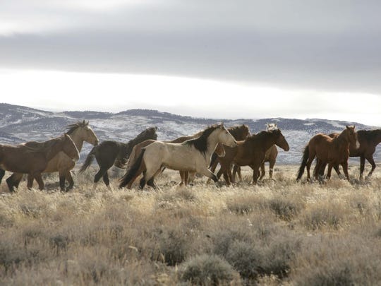 The U.S. Bureau of Land Management is seeking financial help to manage herds of wild horses and burrows in California and nine other western states.