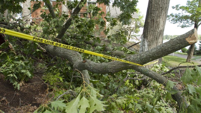 Trees on either side of Wildwood Street in Genoa Township near Lake Chemung fell overnight Sunday due to high winds and a strong rainstorm.