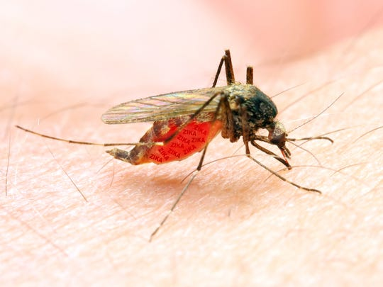 A Michigan resident is sick with Eastern equine encephalitis, which is transmitted by mosquito bite.