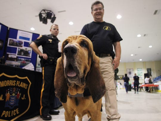 K9 Reno's Ripley, a Bloodhound with the National Police