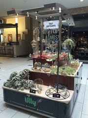 Tilly Air Plants has opened at The Empire Mall.