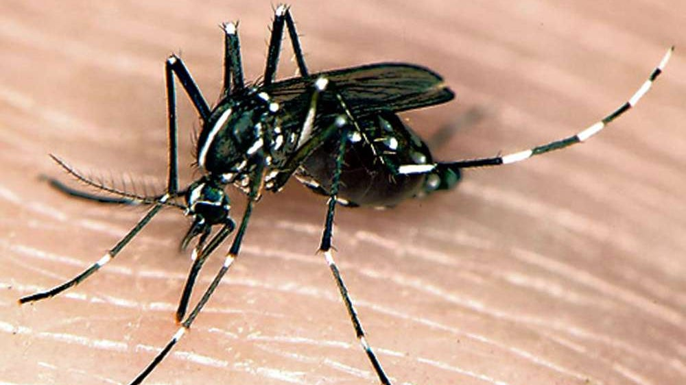 Mosquitoes Found In New Jersey