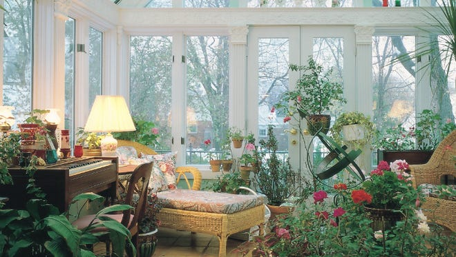 Windows can affect the wellness of your plants