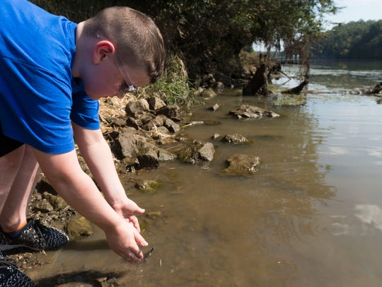 Trey Brewer carefully releases a young sturgeon into