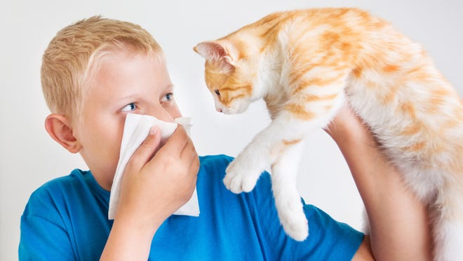 A HEPA filter can help remove pet dander particulates from the air in your home.