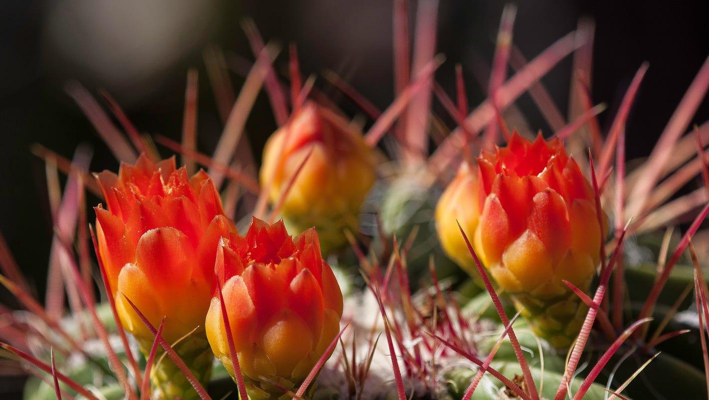 photographer captures mother nature u0027s desert bouquet