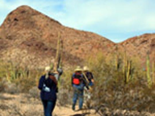 Travelers tired of the beaches at Puerto Penasco can take just a few steps inland to explore pristine Sonoran desert.