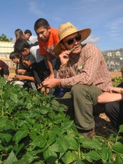 Chris Massa, in hat, farm-to-school operations specialist for the Ventura Unified School District, encourages seventh-graders in Jessica Winchester's world geography class to eat a string bean as they help harvest them Monday in the Salad Bar Farms garden at Balboa Middle School.