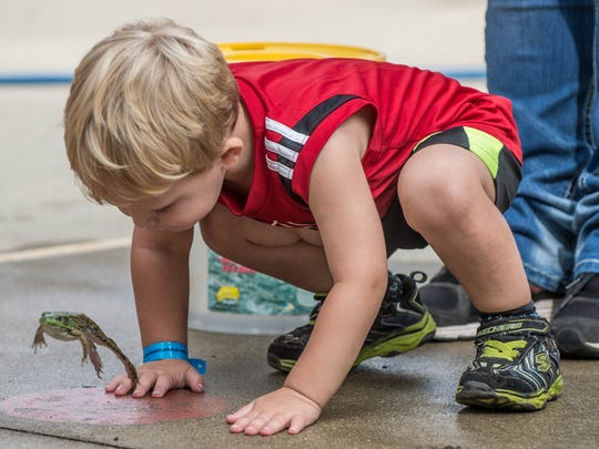 The Calhoun County Fair's annual frog jumping contest