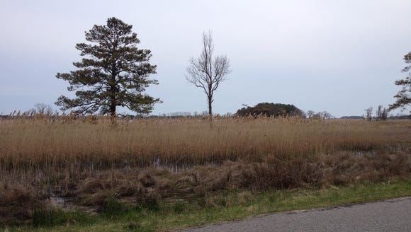 I took this photo while running at the Chincoteague