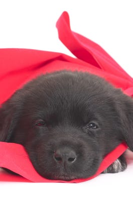 Sinclair has a couple of puppies in MaryJanice Davidson's latest,