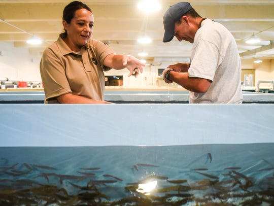 Game warden Kqyn Kuka works with Hatchery Manager Ryan