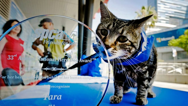 Tara, a 7-year-old adopted cat poses for a photo with her award prior to being presented with the 33rd Annual National Hero Dog Award in Los Angeles, Friday, June 19, 2015.