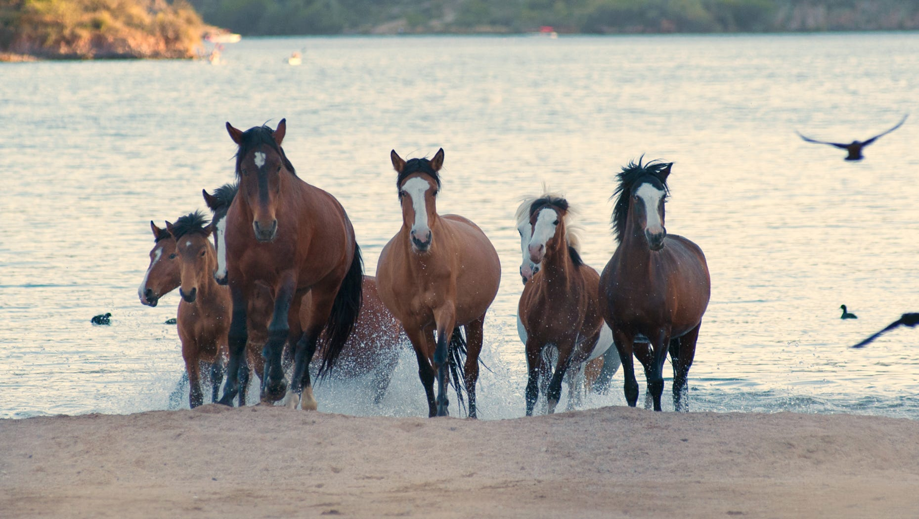 Culling Of Wild Horses Allowed By Congressional Panel