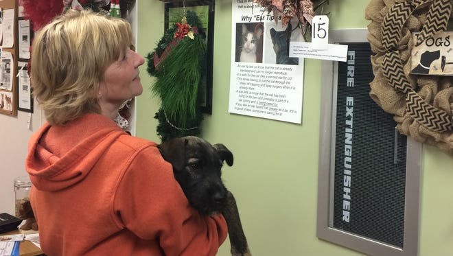 Livingston County Animal Control and Shelter employee Caroline Gwizdala and Charlie, a puppy up for adoption, admire some of the holiday wreaths on display in the shelter lobby.