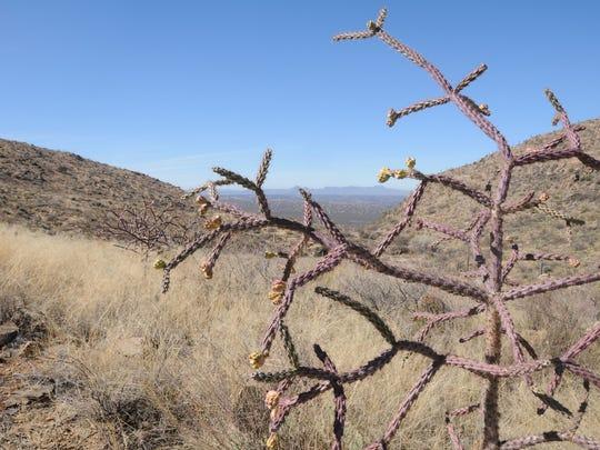 From the main trail through desert grasslands, you'd