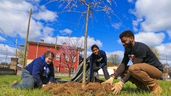 Anastasia Kauffman, left, Sindhu Darupalli, center, and Darrin Johnson work to plant a tree in the 1500 block of West Muhammad Ali Boulevard on Saturday as part of the Love Louisville Trees campaign. Around 166 trees were planted.
