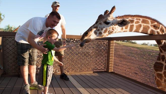 Matt Akins and Zachary Akins, of Goodyear, feed a giraffe at the Phoenix Zoo.