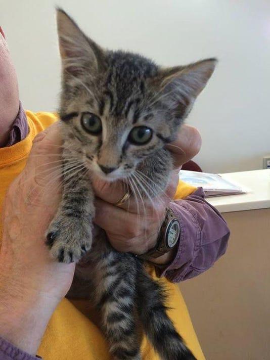 kitty oct 27 (1).jpg